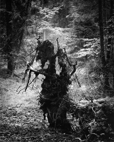 fot_Pawel Piersinski_z cyklu Puszcza Jodlowa_Lesny stwor_brom_1969_2