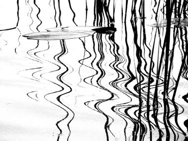 Barbara Bokota-Tomala_Rzeszów_Woda_fotografia_7,5x10 cm